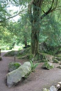 Blarney Castle :: Stone Circle