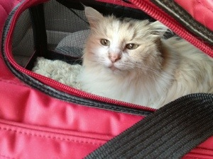 Sophie and her carrier