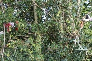 Tobar Losa :: Rag Tree