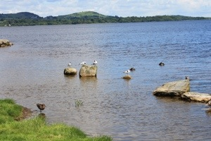 Lough Derg :: Southwest Side with some Wildlife