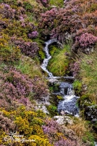 Wicklow Heather & Waterfall