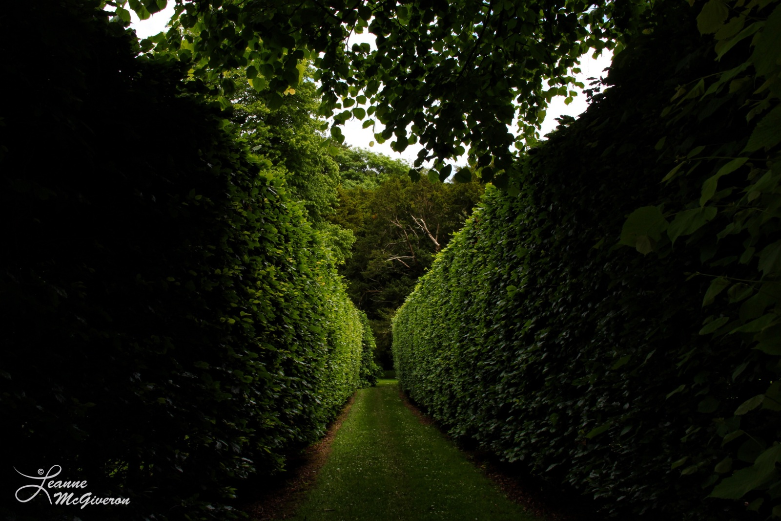 Hedges, Kilruddery House & Gardens, Bray, County Wicklow