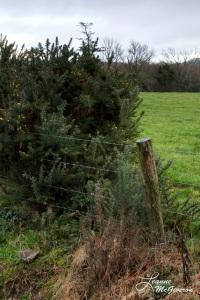 Kilmacrugh, County Wicklow