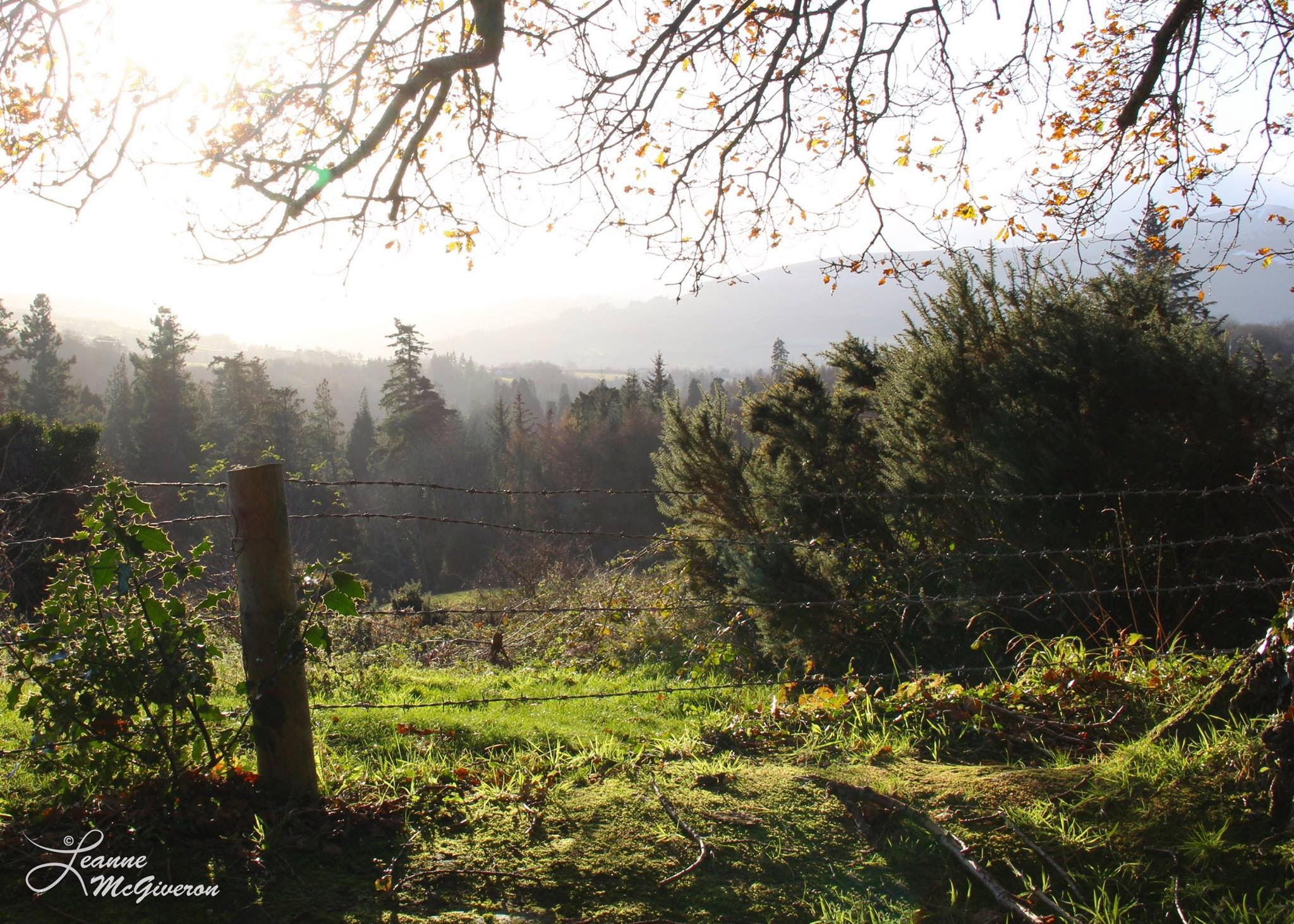 On the Edge of Powerscourt Estate