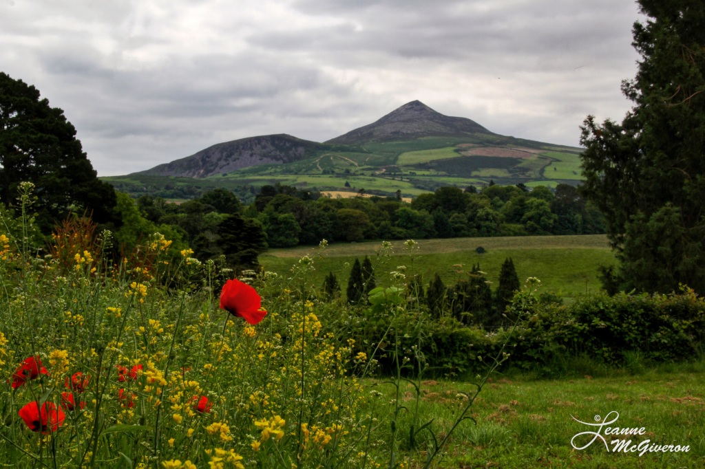 The Great Sugar Loaf and Poppies