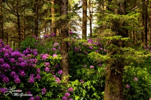 Among the Rhododendrons