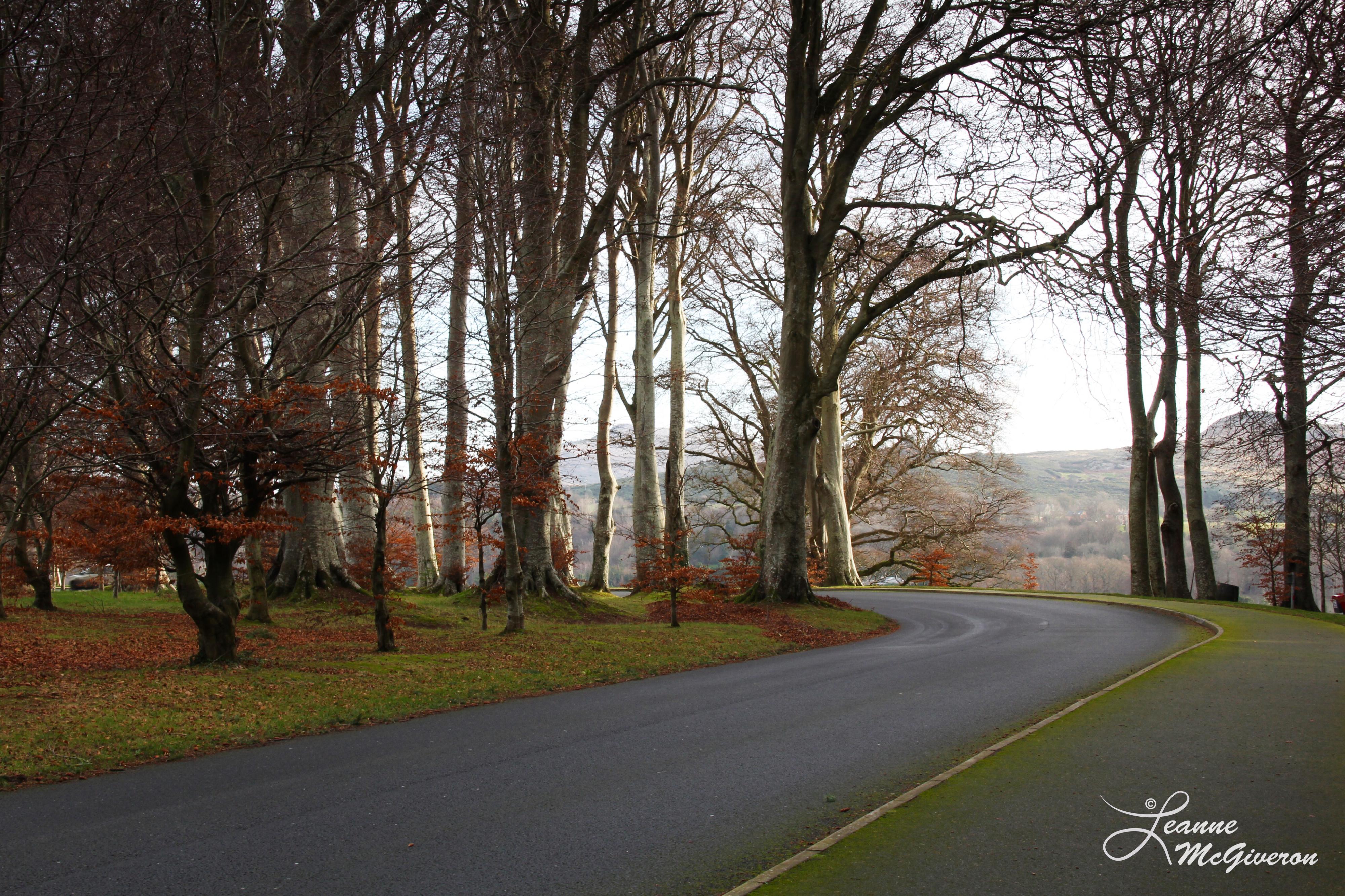 The Lane to Powerscourt Estate