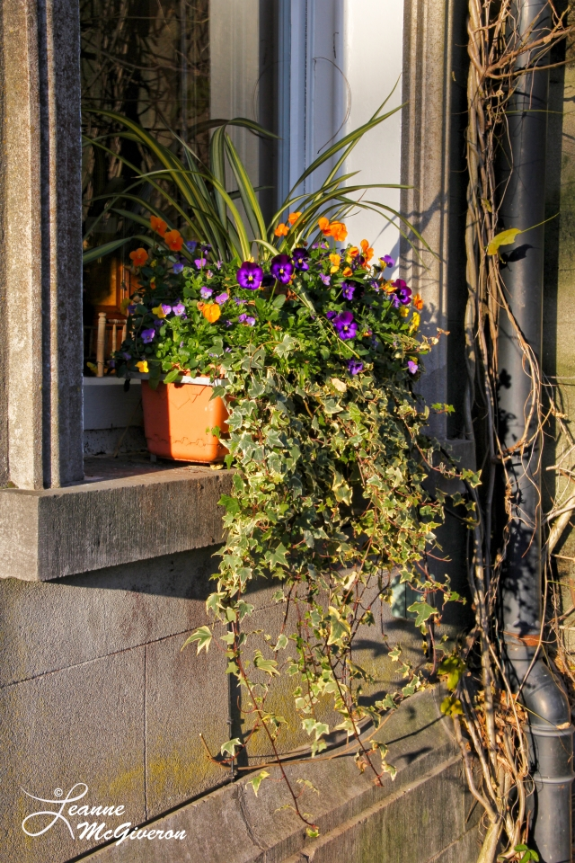 An Annual Window Box